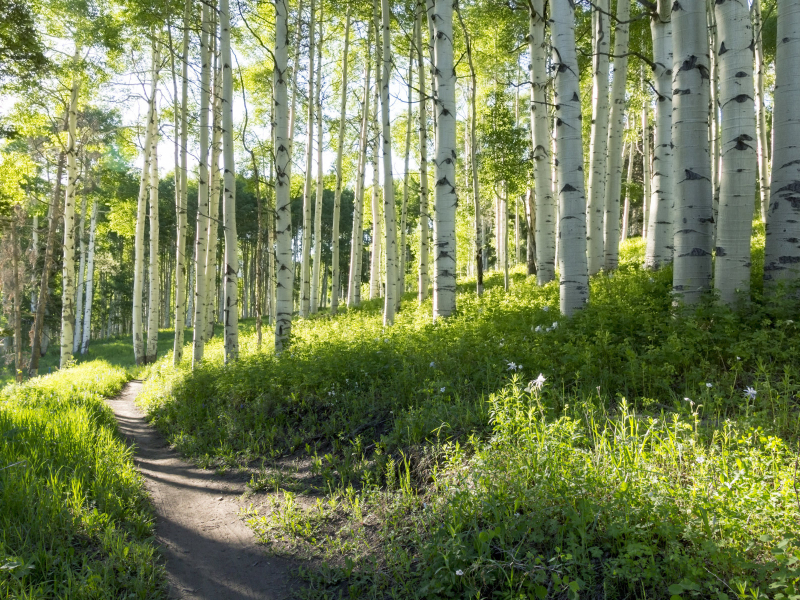 Hiking in Vail and Beaver Creek