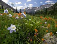 Summer in Vail and Beaver Creek