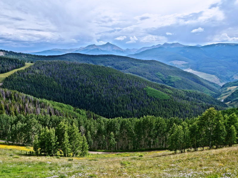 beaver creek in the summer