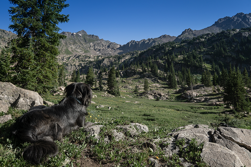 Dog in Vail
