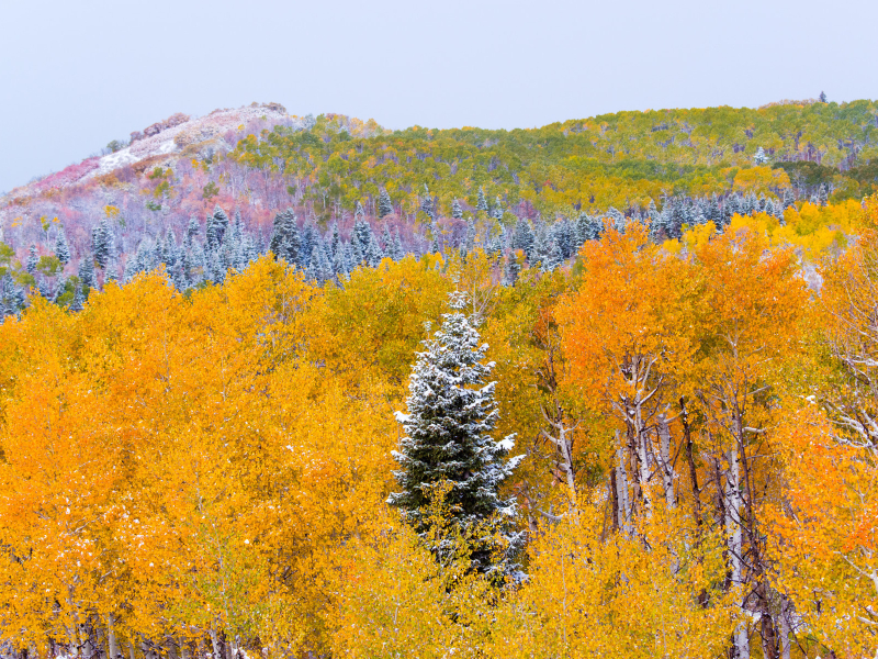 Fall in Steamboat Springs | Moving Mountains