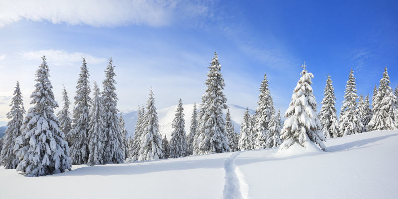Winter Wonderland Special